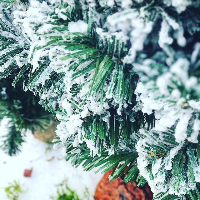 It's that time of the year again! Bring on the holidays! 😁🎄   www.jasenmancilla.photography   #tree #snow #wood #cold #winter #holiday #green #pinetree #freezing