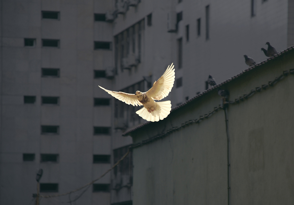 receiving holy spirit - We were never designed to live the Christian life alone, that's why God gives us His Holy Spirit