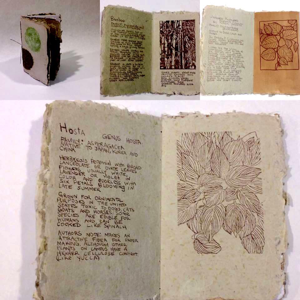 Plant Identification Book