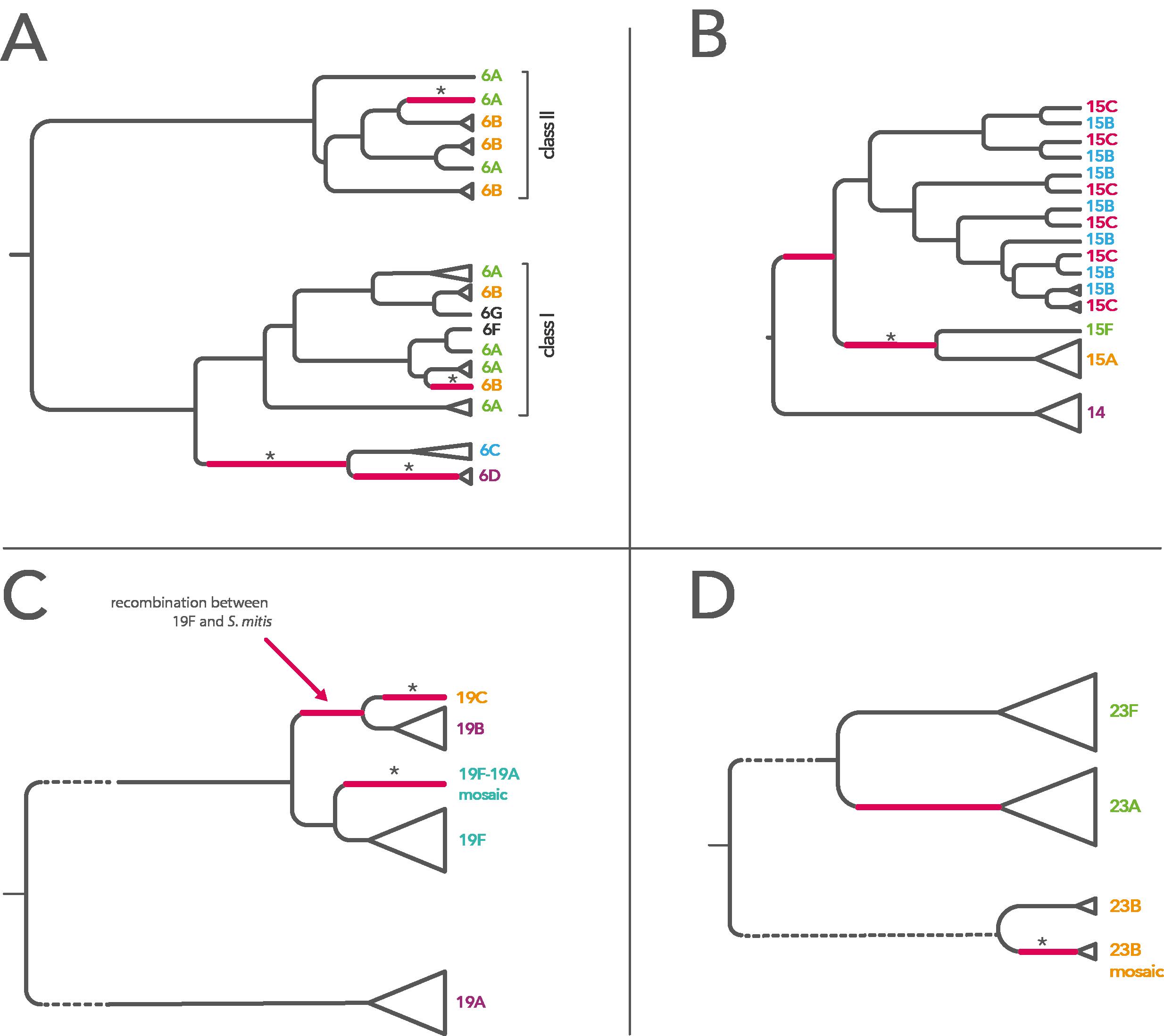 Summary of evolutionary history of serogroup 6 (A), serogroup 14/15 (B), serogroup 19 (C) and serogroup 23 (D). (From [1].)