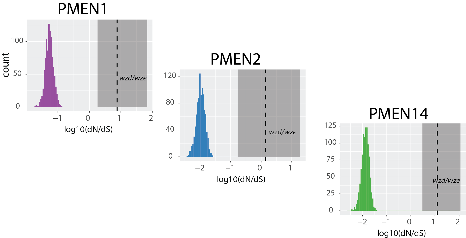 Diversifying selection acting on the  wzd / wze  genes in the  cps . Distributions show the range of dN/dS values in the genome. (From [1].)