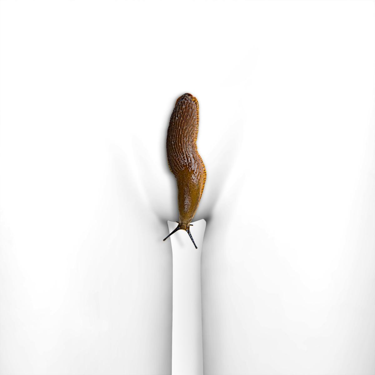 the snail.JPG