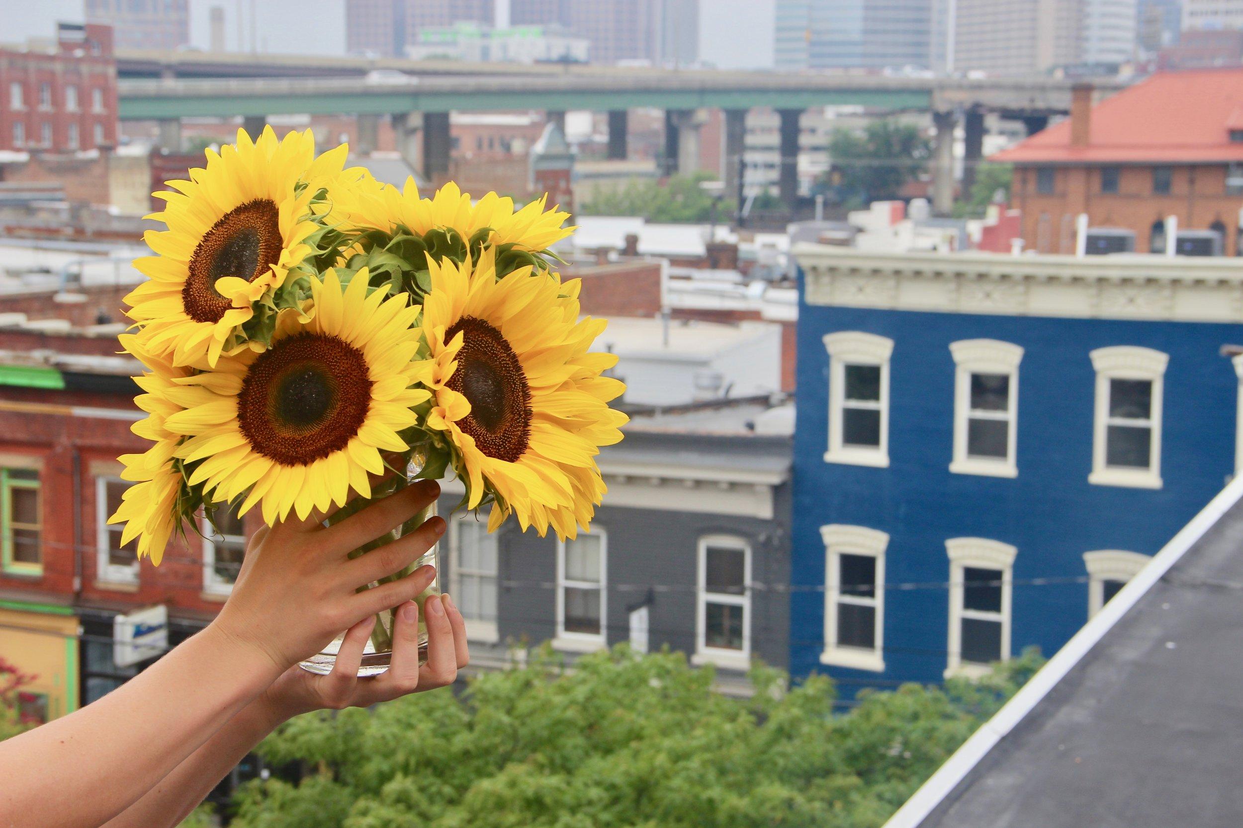 The Simple Sunflower