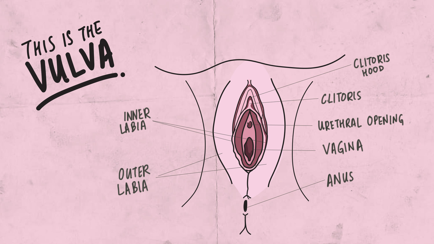 Anatomy of a vagina (credits: http://www.howtoadult.sg/fyi-penis-and-vagina/ )