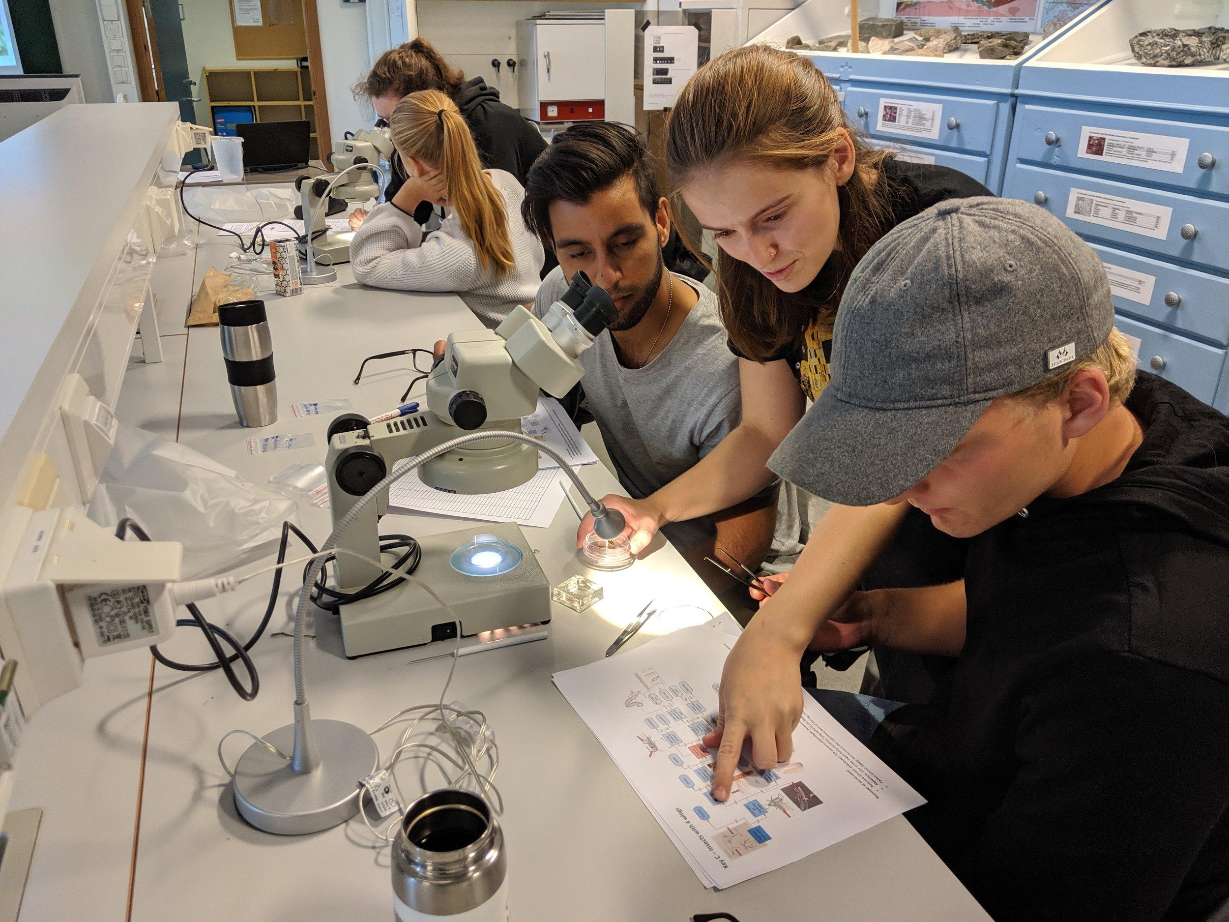 Taksonomi for nybegynnarar: Karminder Badhwar og Martin Granheim får opplæring av Amalie Svendsen i å bruke ein enkel nøkkel for å plassere insektfunna i rett gruppe. Foto: Kyrre Groven.