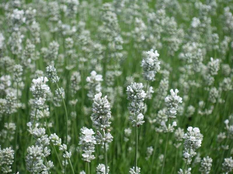 Fonkelnieuw 22 Planten die Tegen Droogte kunnen [FOTO'S] — the Writing Gardener BJ-42