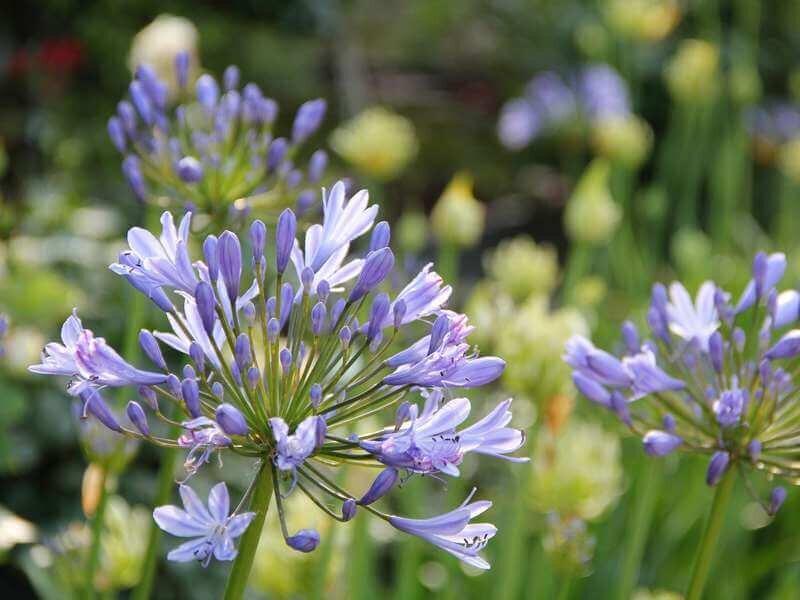 Betere 22 Planten die Tegen Droogte kunnen [FOTO'S] — the Writing Gardener JJ-92