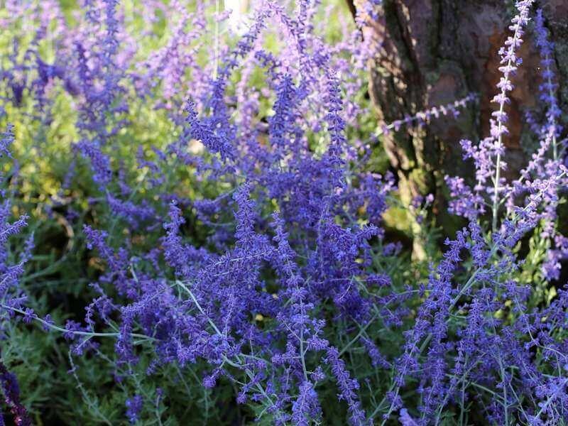 Uitgelezene 22 Planten die Tegen Droogte kunnen [FOTO'S] — the Writing Gardener SP-09