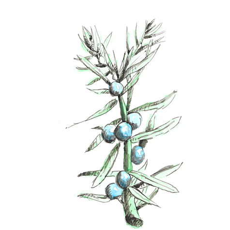 juniper+ingredients.png