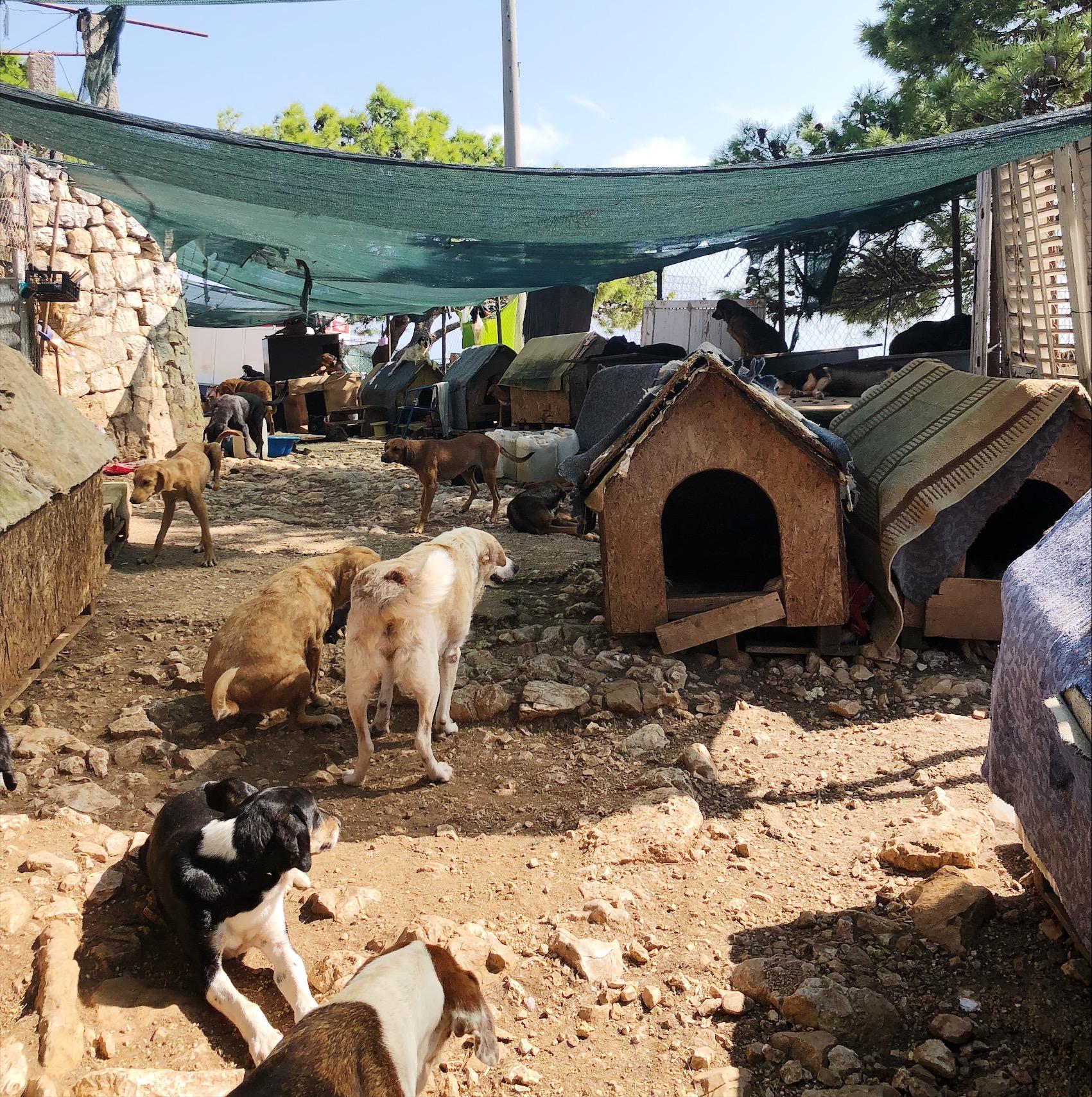 Zarkovica Animal Shelter