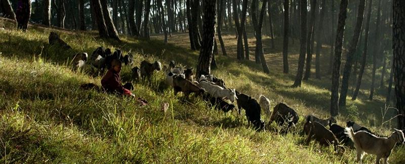 Black+Goat_web.jpg