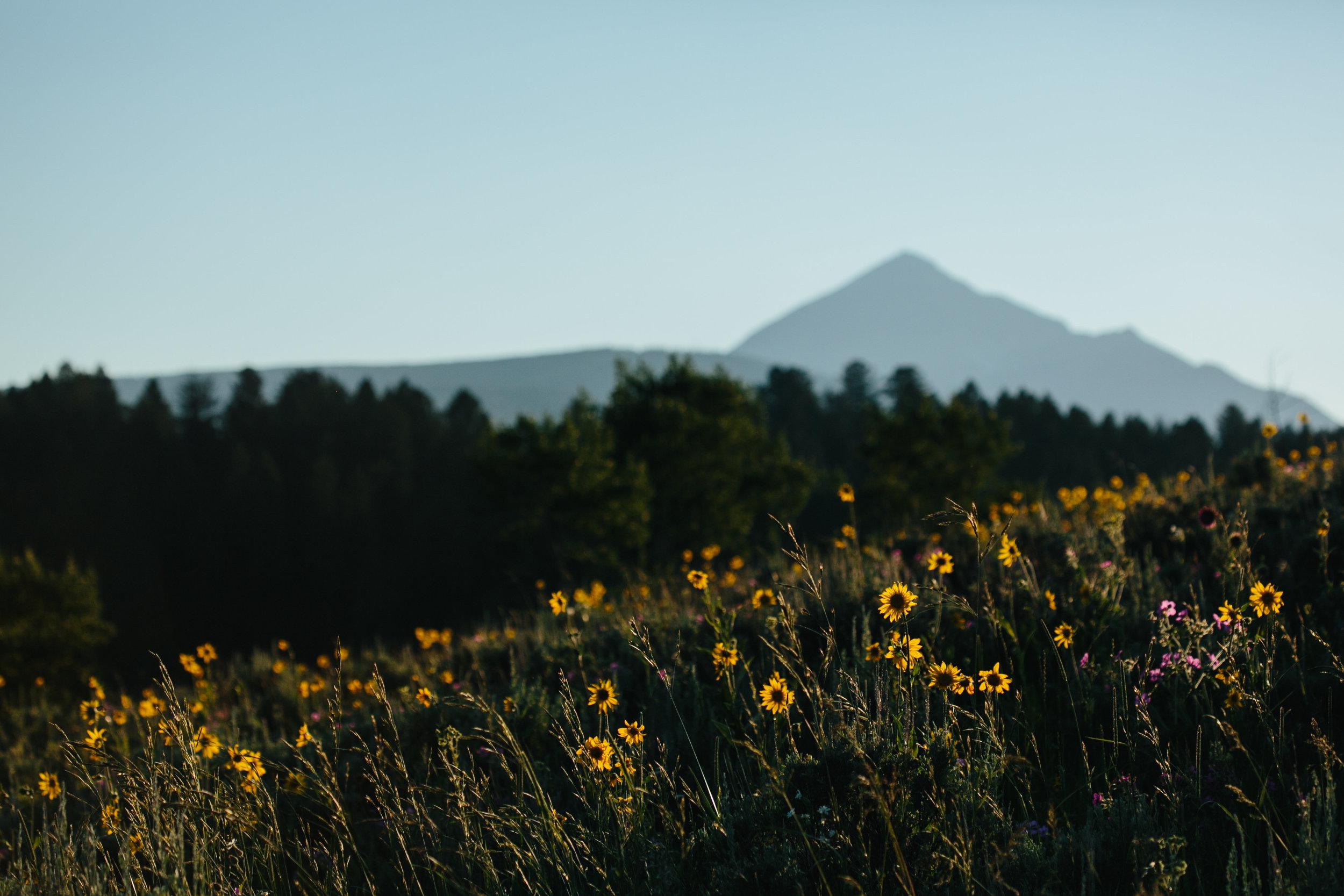 BigSkyWildflowers.jpg