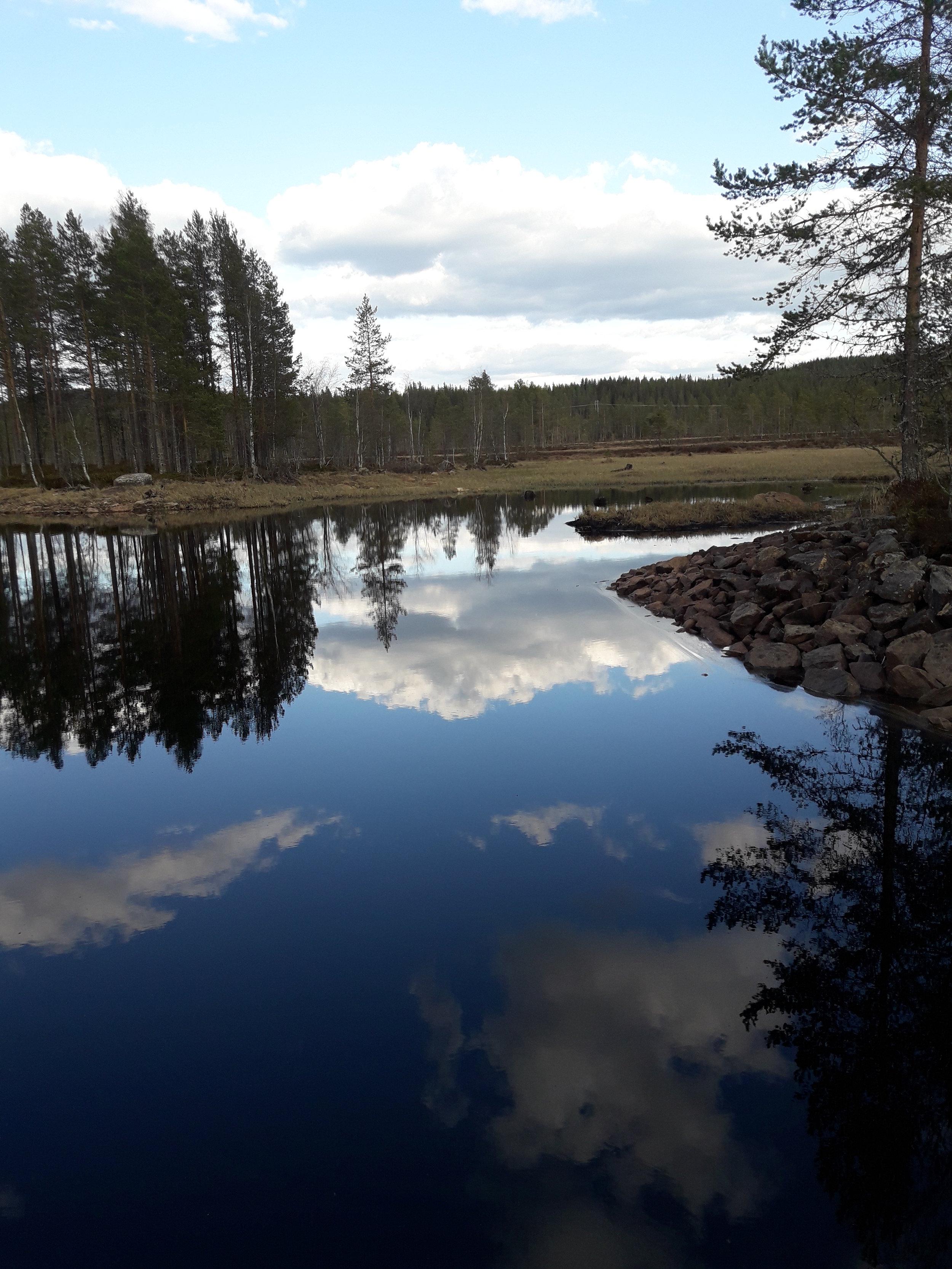 Speilblankt vann_Våtmark.jpg