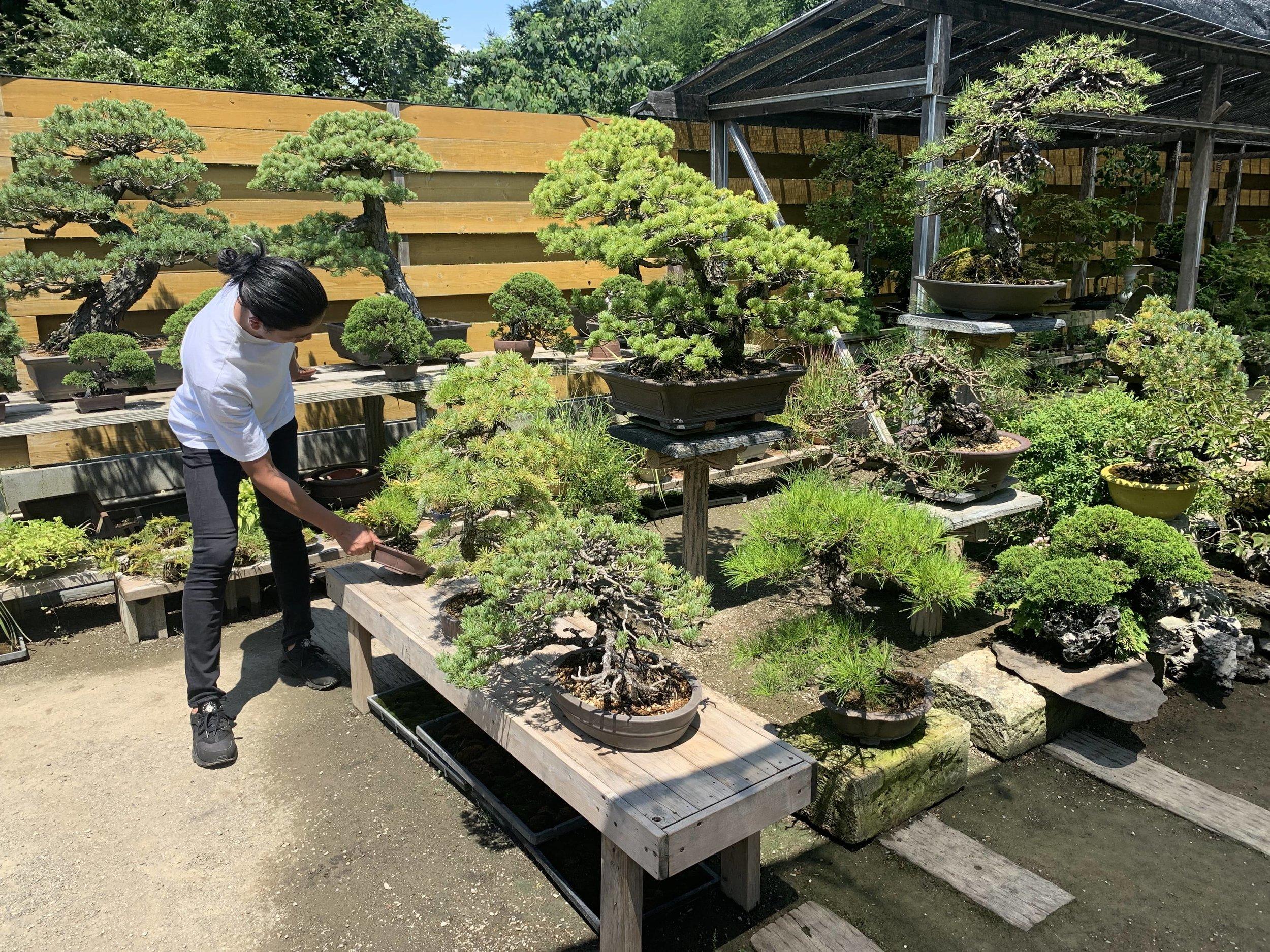 盆栽の整理をする平尾成志