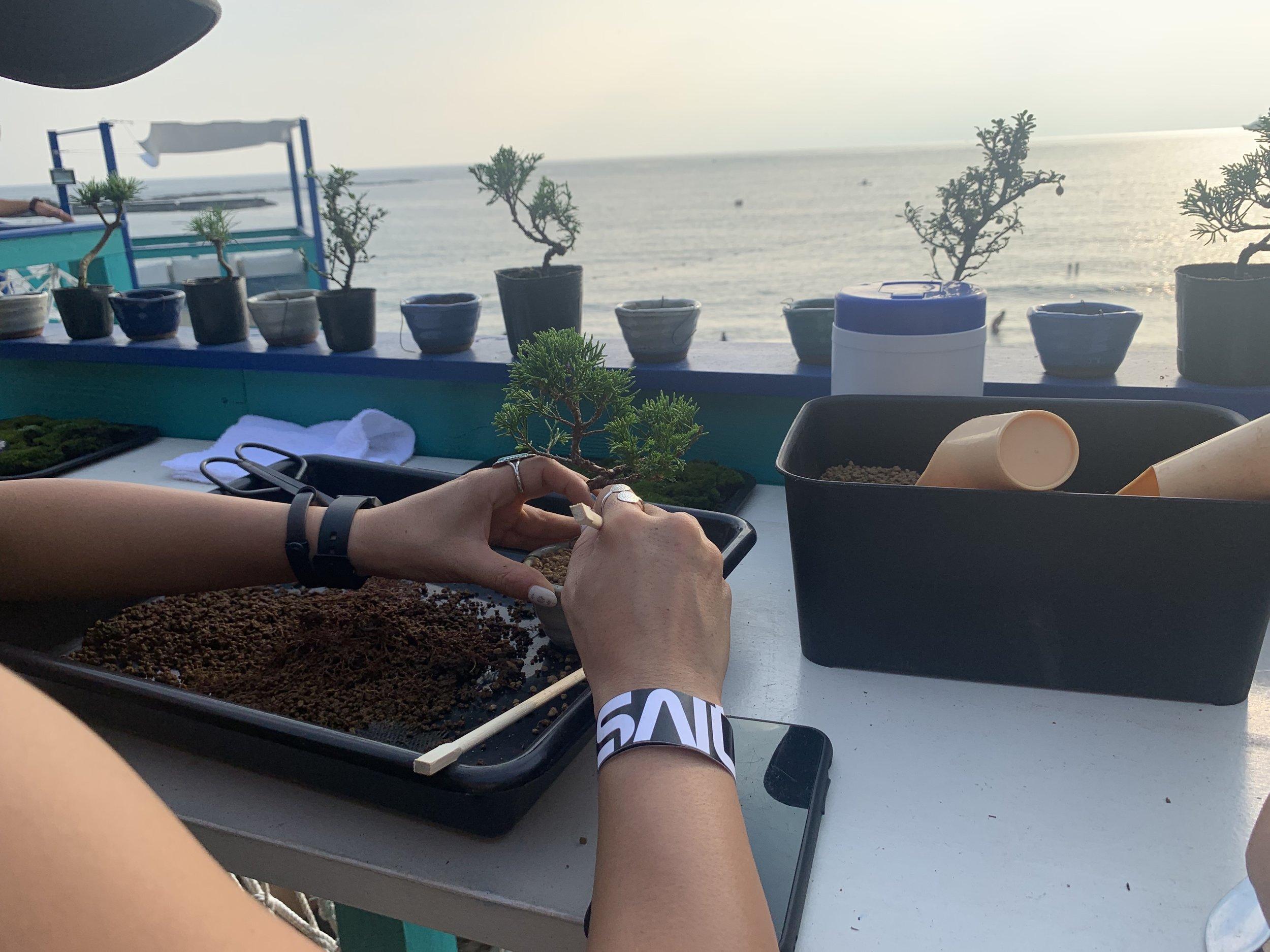 海を眼前に平尾成志の盆栽ワークショップ