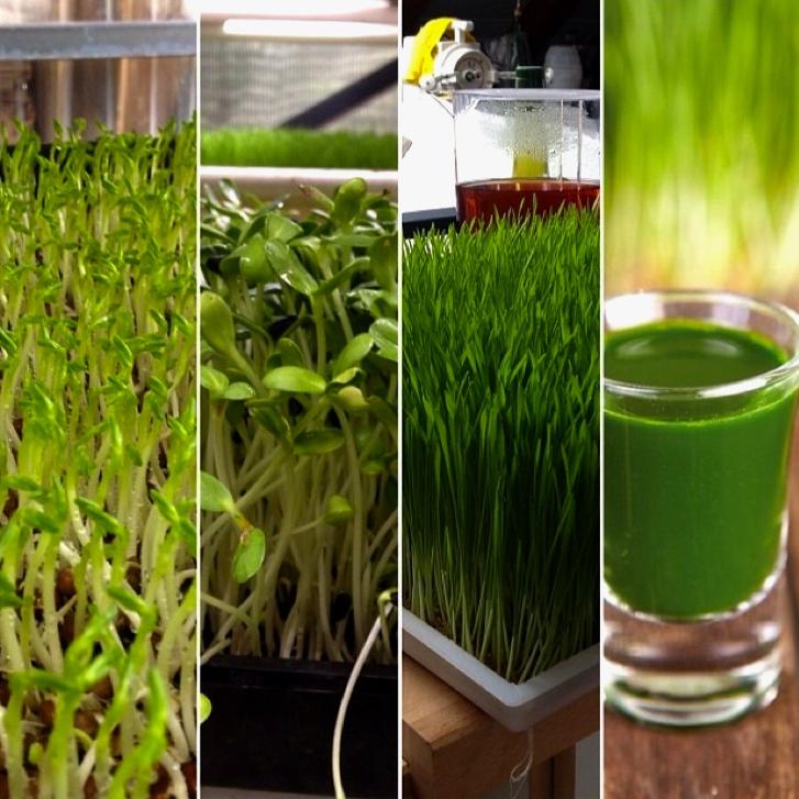chlorophylle.jpg