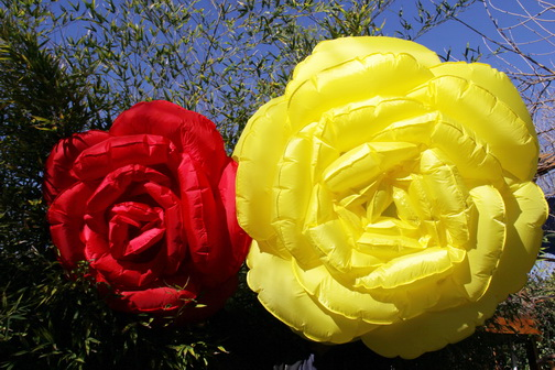 Roses-red-v-yellow-em_02.jpg