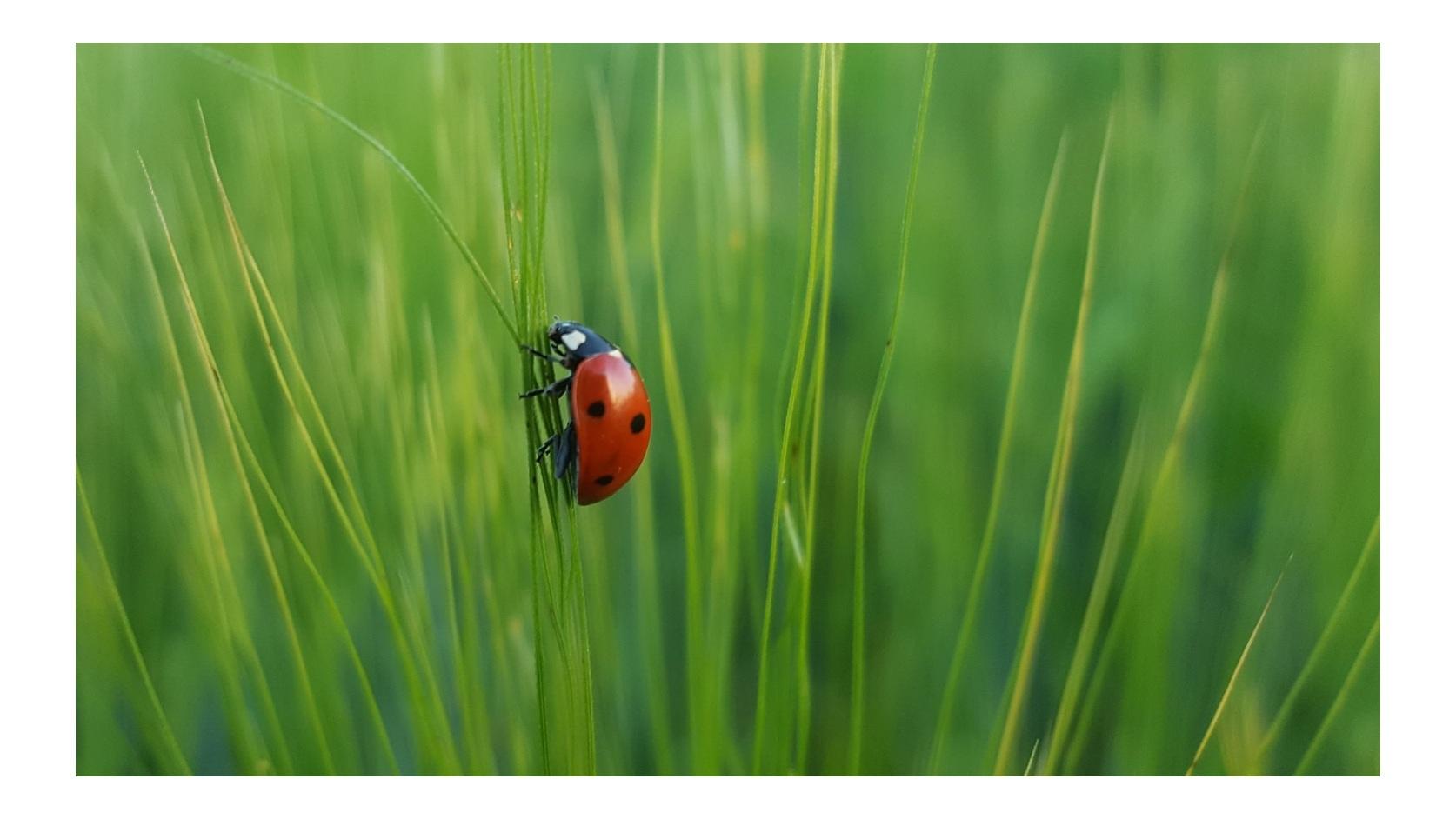 balance-by-heather-gream-ladybug-martin-oslic-Qi93Pl5vDRw-1500.jpg