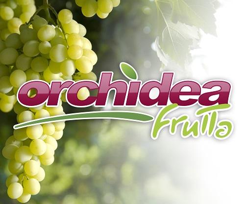ORCHIDEA frutta-LQ.jpg