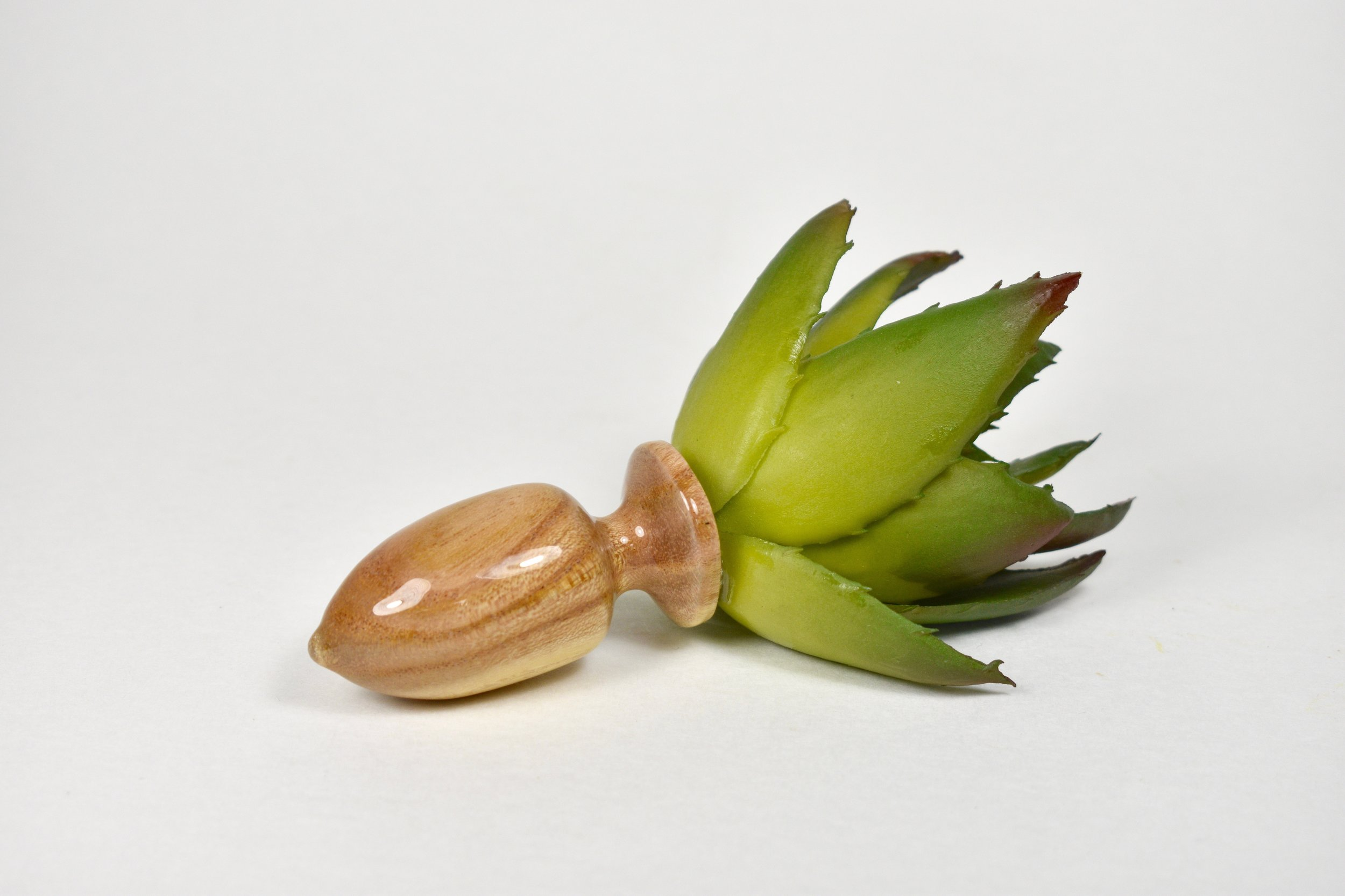 Smol Succulent Seed