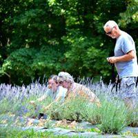 lavender site 10.jpg