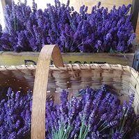 lavender site 1.jpg