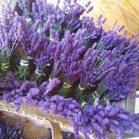 lavender site 2.jpg