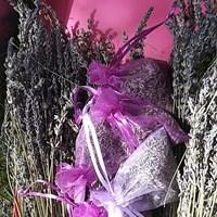 lavender site 3.jpg
