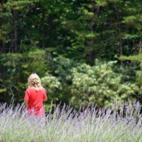 lavender site 12.jpg