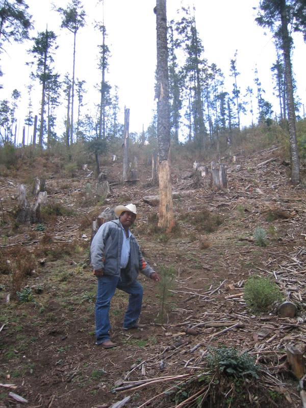 mexico-guy-planting-trees.jpg