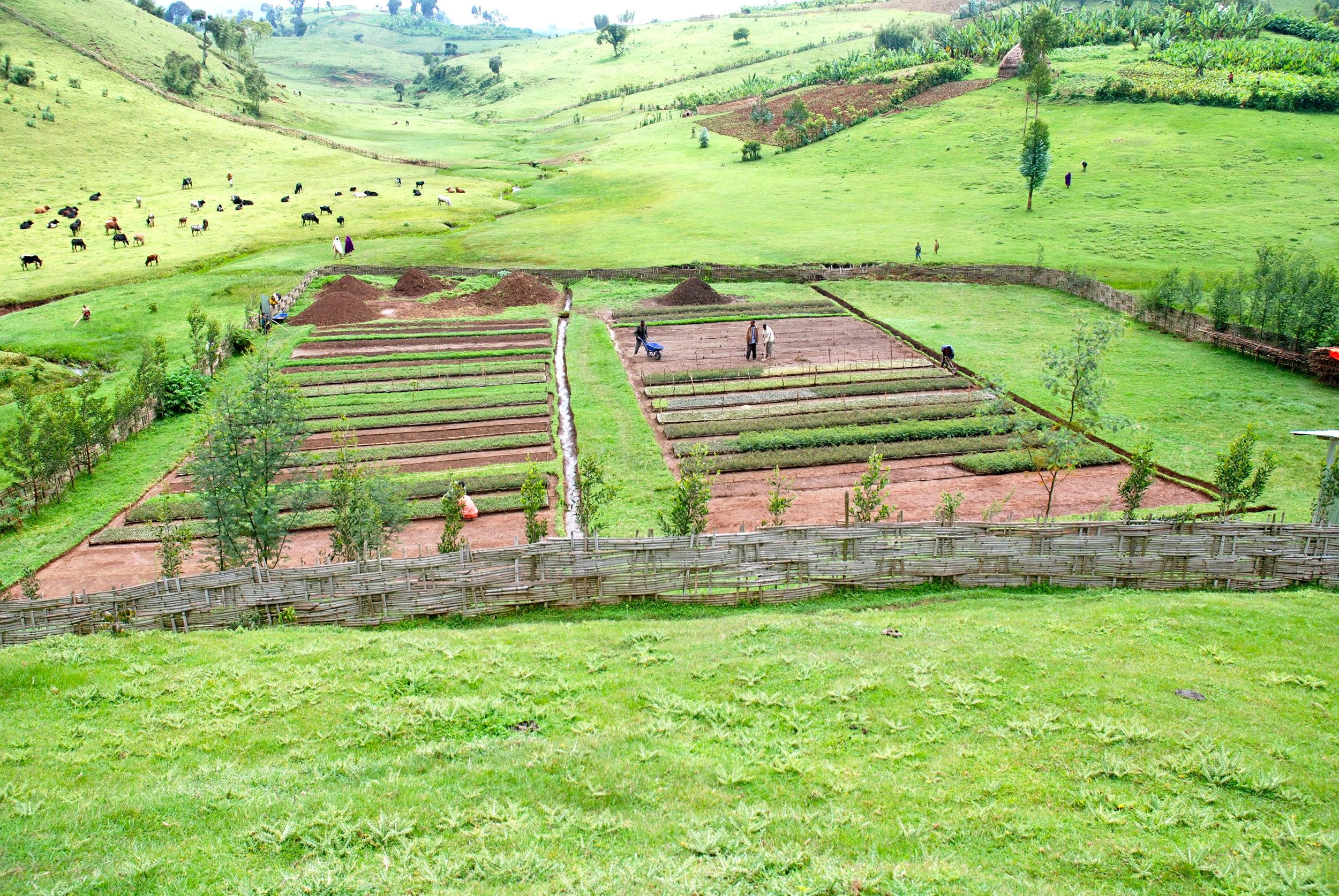 planting-trees-ethiopia_0.jpg