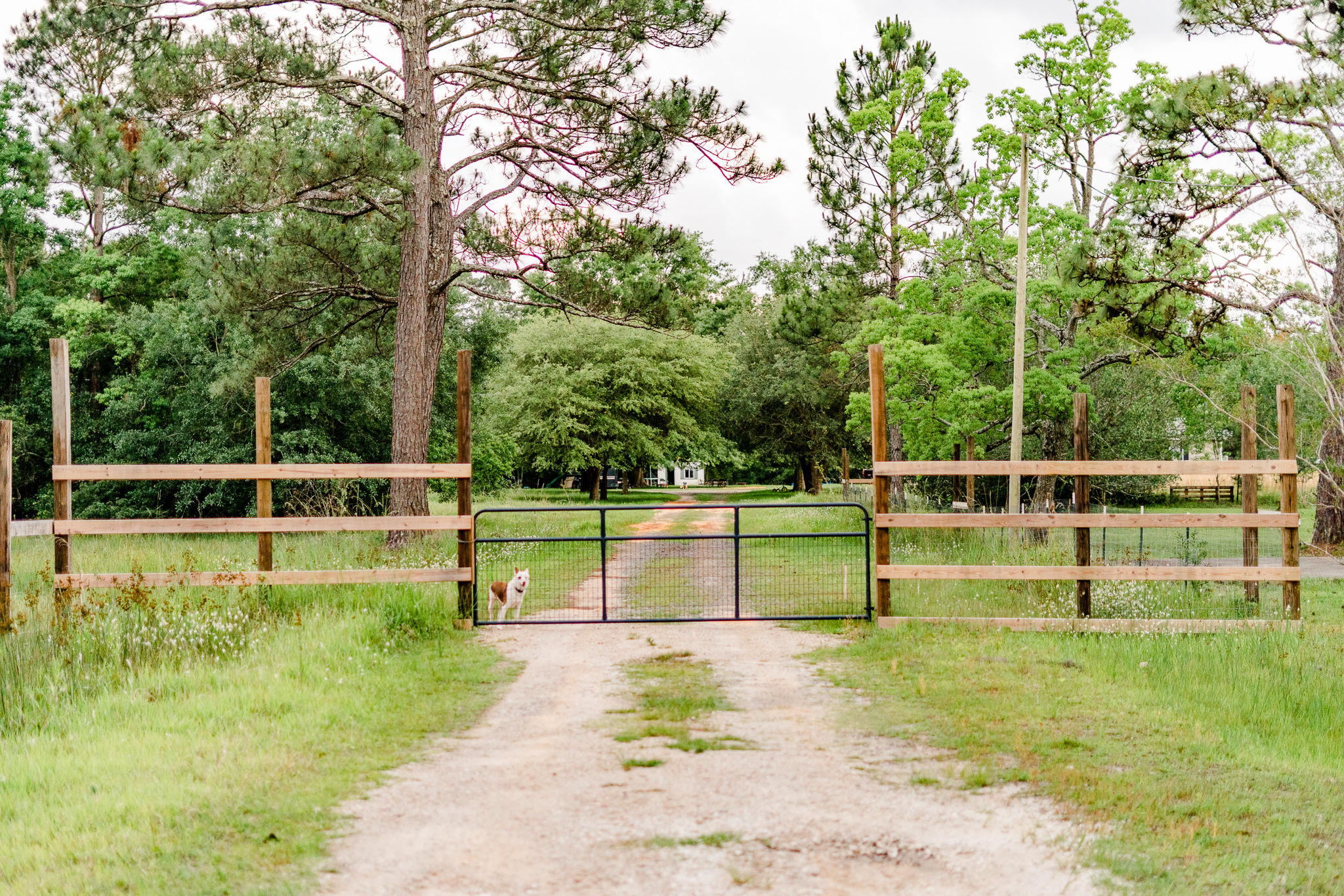 This is the front gate of Redemption Square Farm. If you call or text me to let me know you are at the gate, I'll send my happy crew (A.K.A. the Cirlot Kids) to open it for you and let you in.