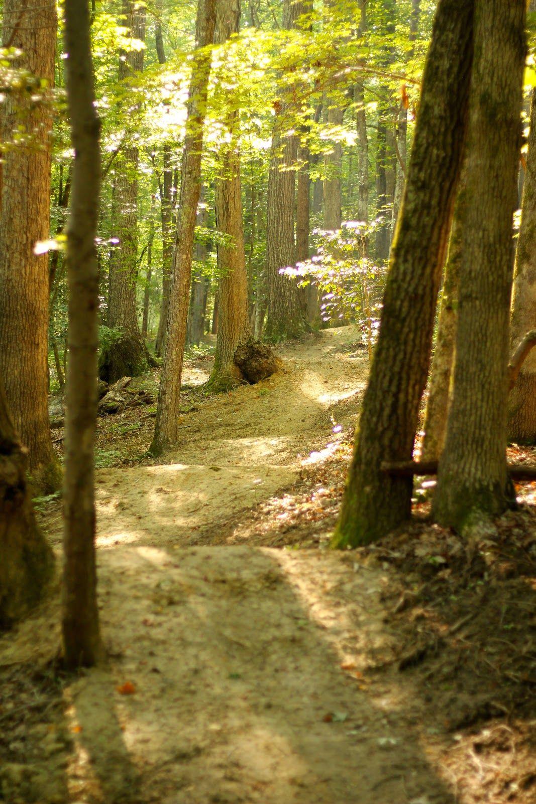 Bike Trail Design   Elevated Trail Design