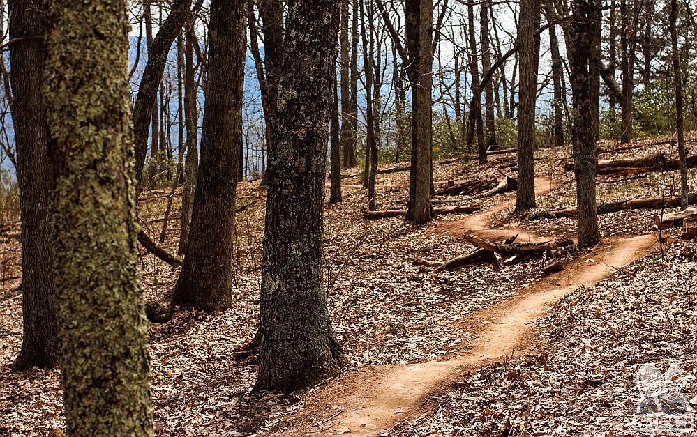 Trail Builders Virginia | Elevated Trail Design