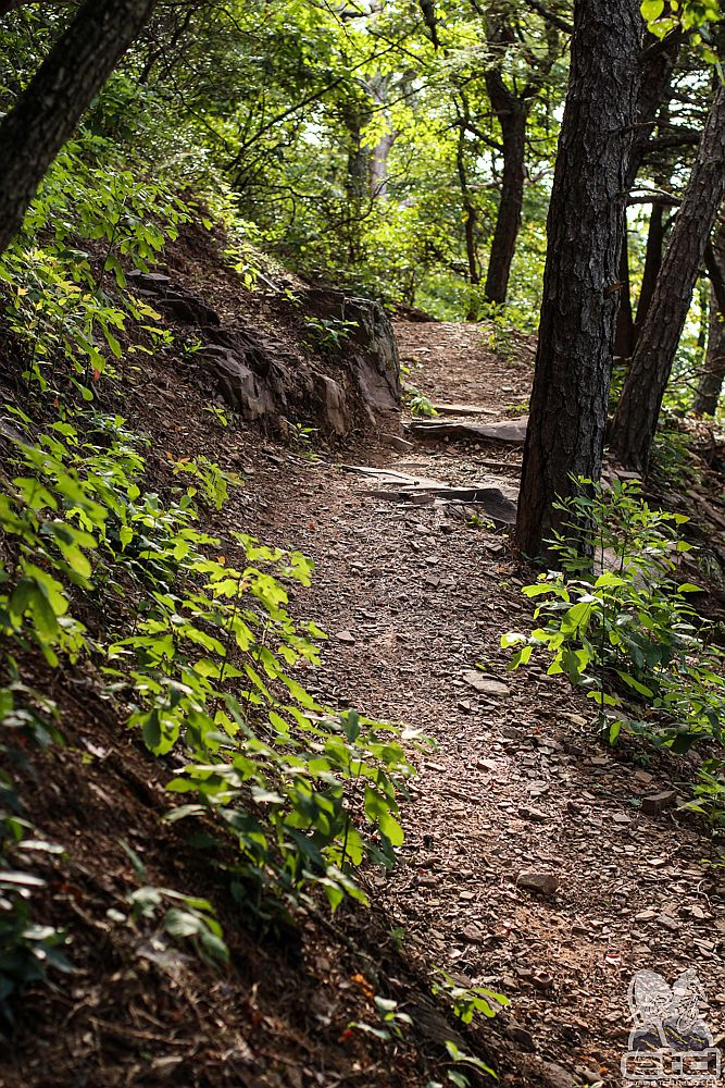 Trail Building | Elevated Trail Design