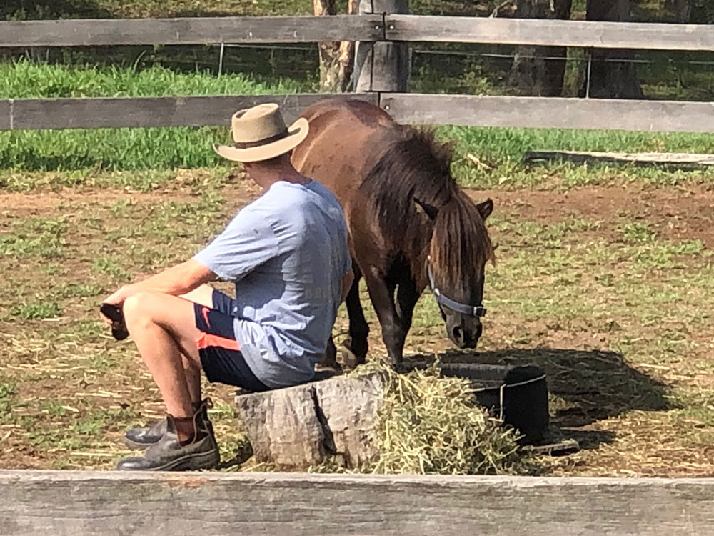 Hunter Valley Tour - Horse Therapy