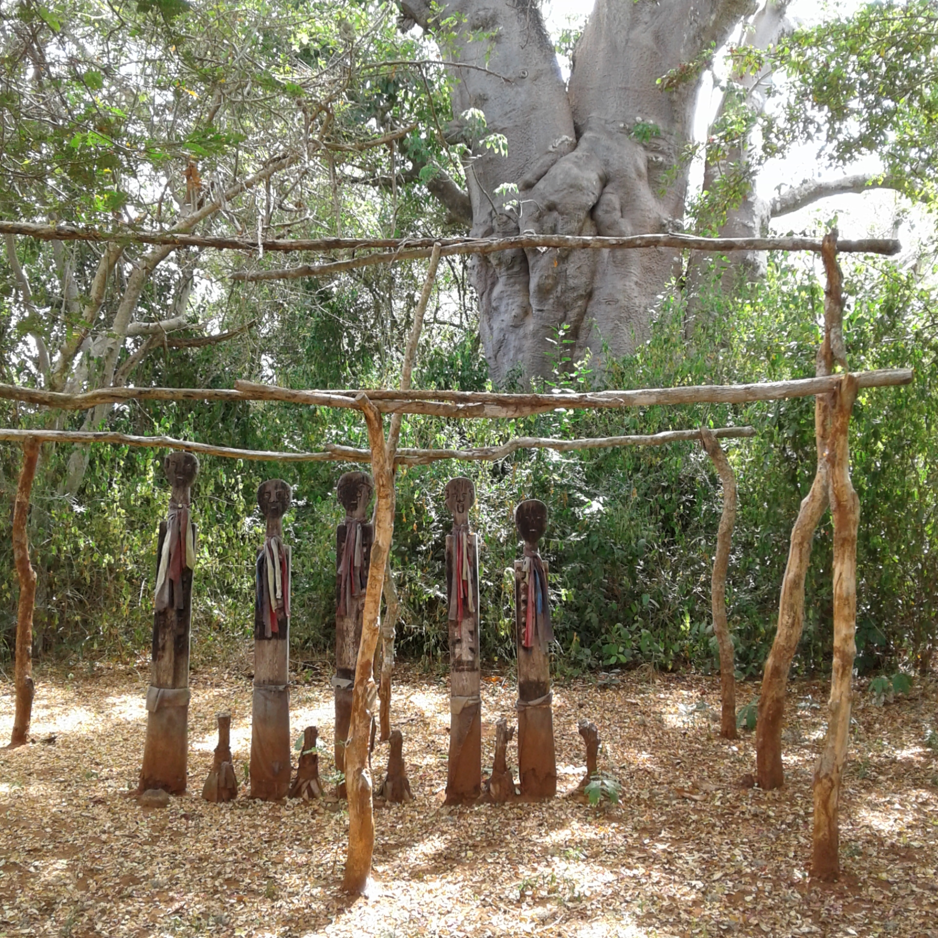 Baobab and fingo ritual mijikenda