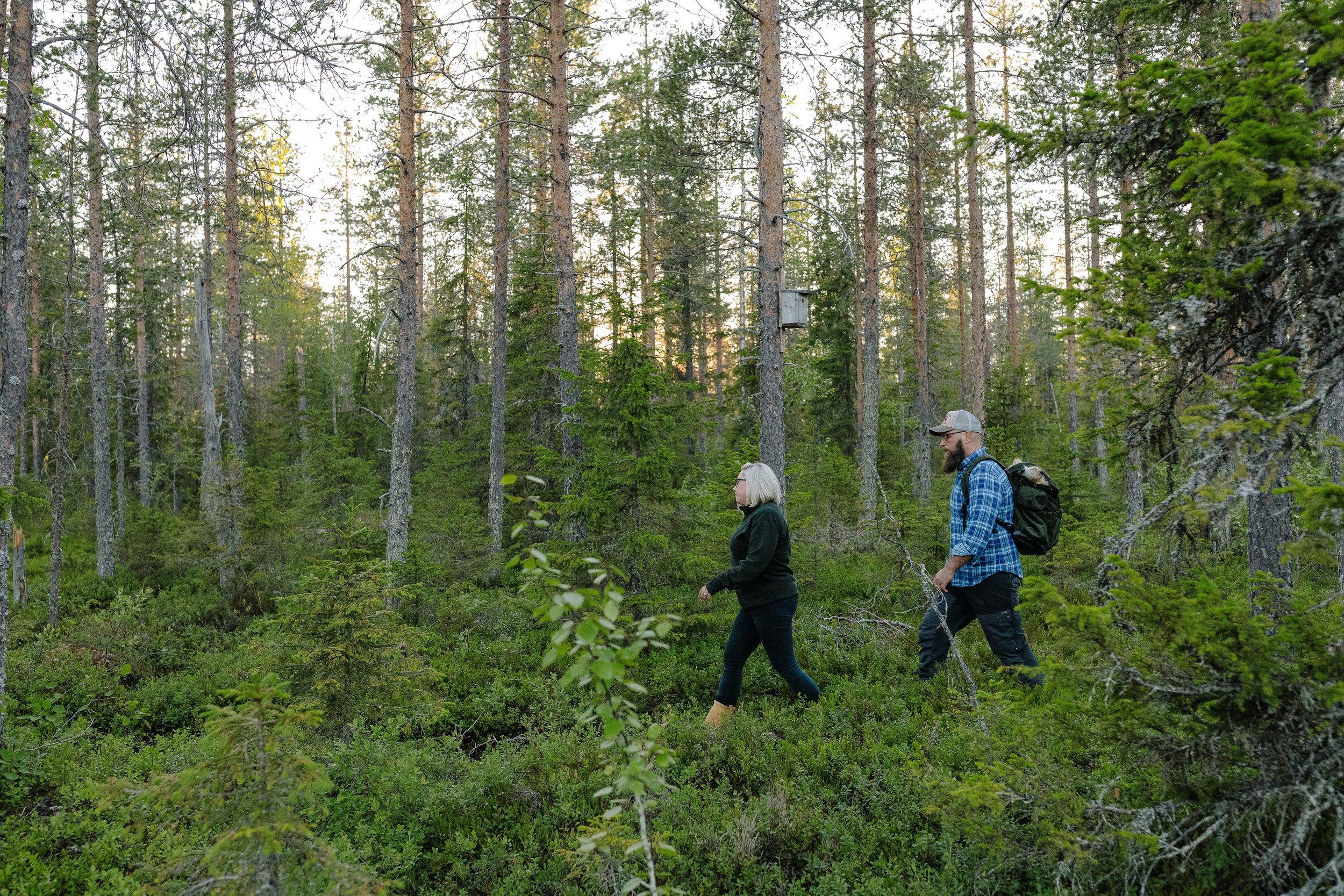 Hiking Övertorneå Arthotel