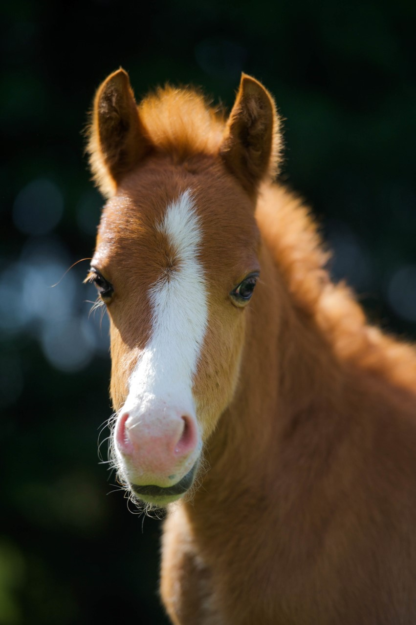 Fudge our first foal born at Help for Horses UK charity