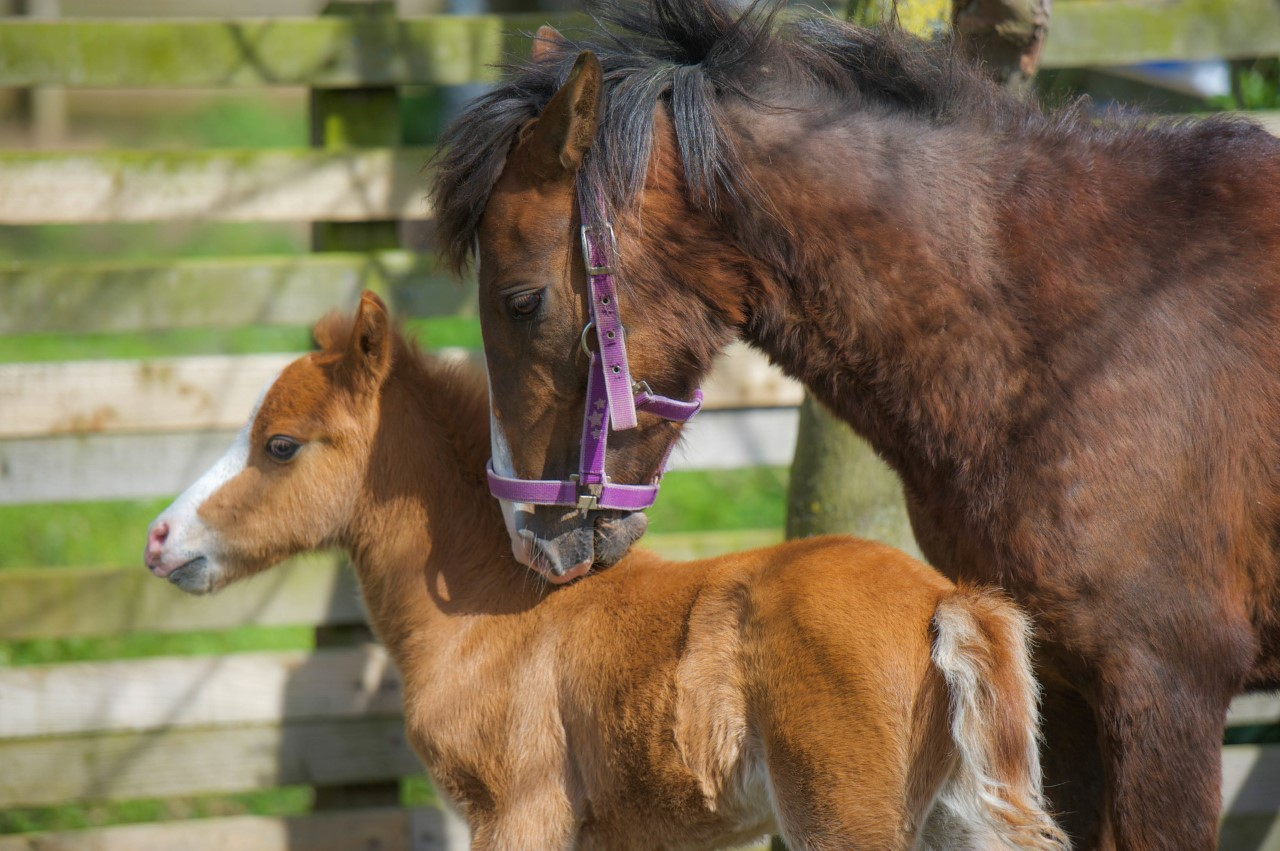 Fudge and her mother at Help for Horses UK