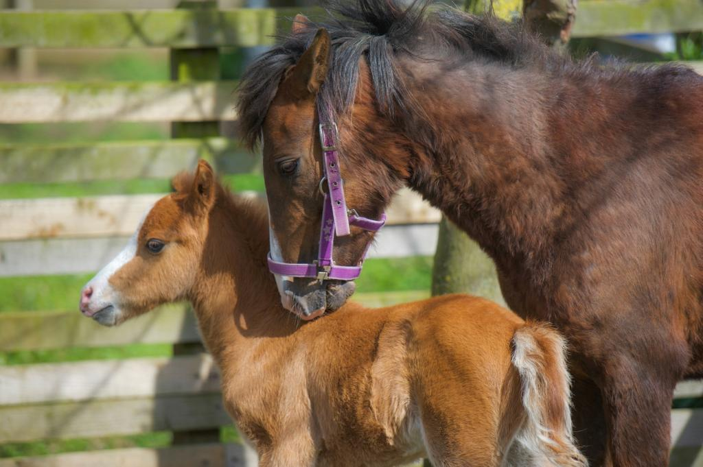 Fudge and her mum at Help for Horses UK