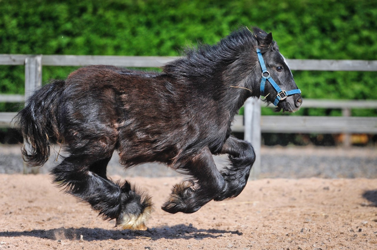 Bubble enjoying a run around in the sunshine at Help for Horses UK