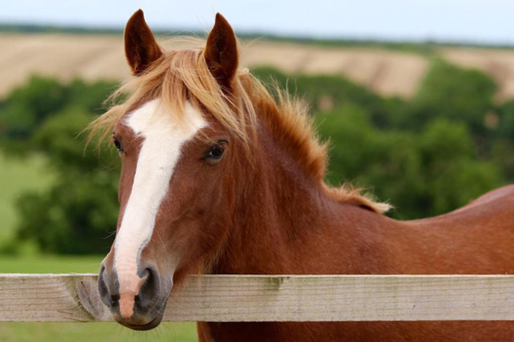Help for Horses UK charity