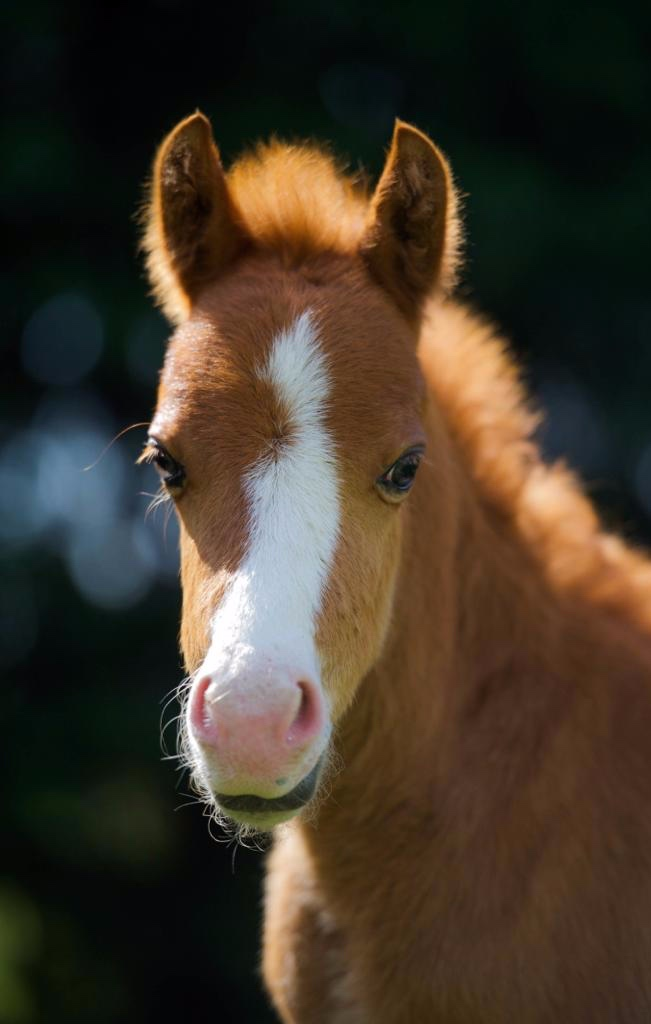 Fudge the foal at Help for Horses UK charity