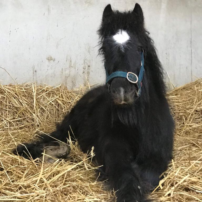 Bubble enjoying his new home at Help for Horses UK