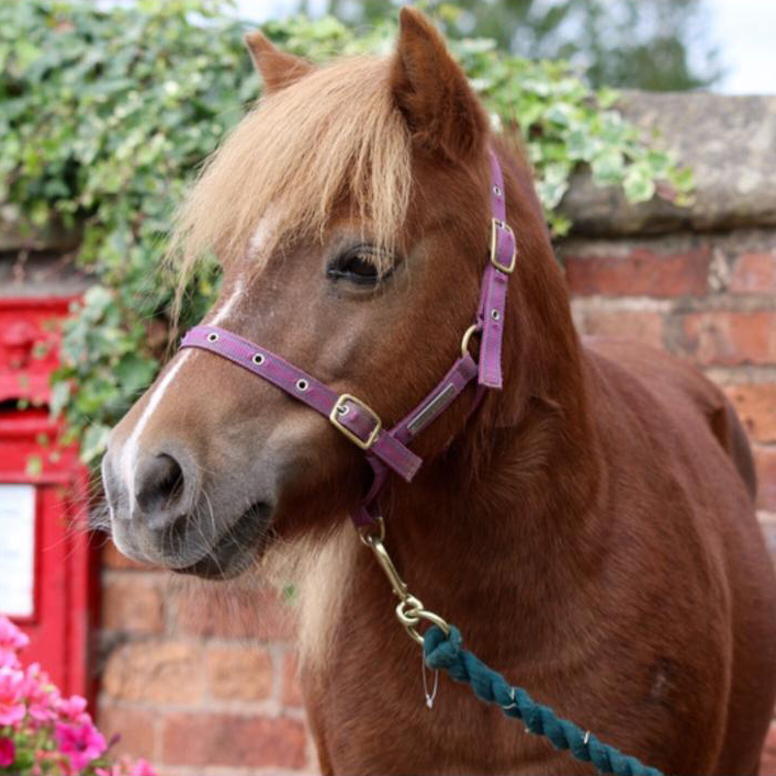 Alice happily rehomed by Help for Horses UK charity
