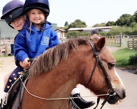 Boggle rehomed by Help for Horses UK Charity