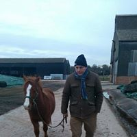 Shrimpy happily rehomed by Help for Horses UK