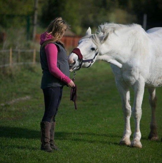 Noble rehomed by Help for Horses charity