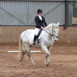 Noble rehomed by Help for Horses UK
